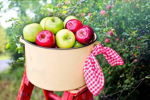 Cesta de manzanas rojas y verdes