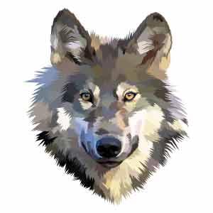 Dibujo cabeza lobo para tatuaje