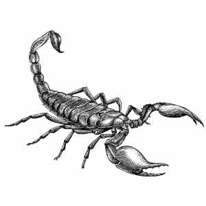 Dibujo escorpión para tatuaje