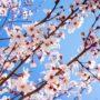 Flores de almendro en primavera