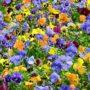 Flores de muchos colores en jardín
