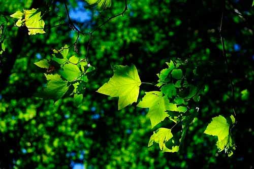 Hojas de árbol color verde