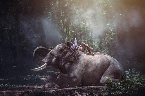 Niño leyendo sobre elefante en la India