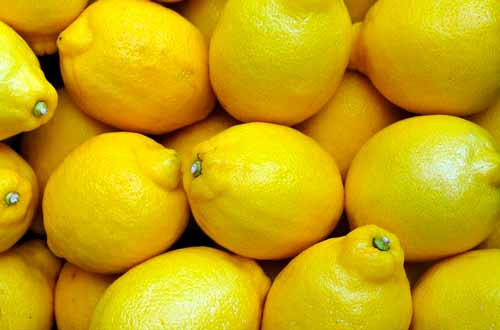 Numeroso grupo de limones