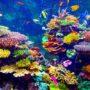 Peces tropicales entre arrecifes de coral