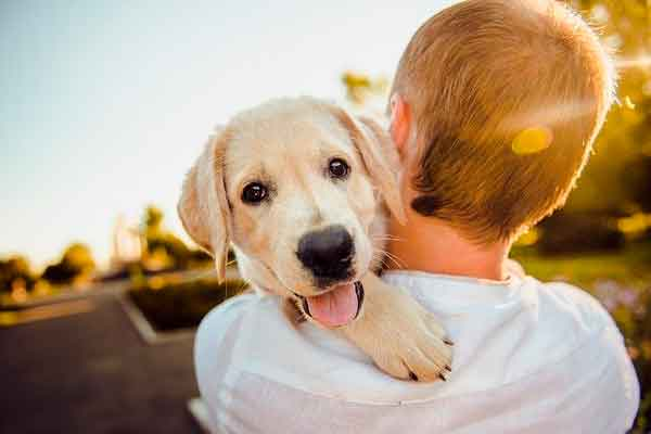 Perro abrazado por su dueño