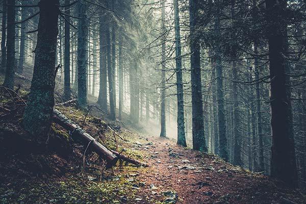 significado de soñar con bosque con muchos árboles
