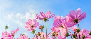 Significado de soñar con un jardín