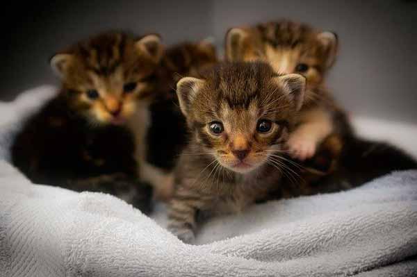 Significado de soñar con camada de gatos