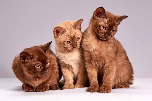 Significado de soñar con grupo de gatos