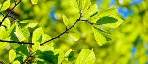 Significado de soñar con hojas de árbol