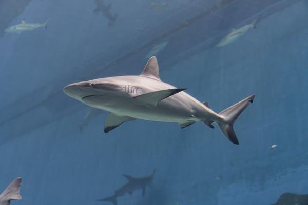 Significado de soñar con tiburones