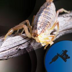 Significado tatuaje de escorpión