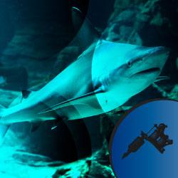 Significado tatuaje de tiburón
